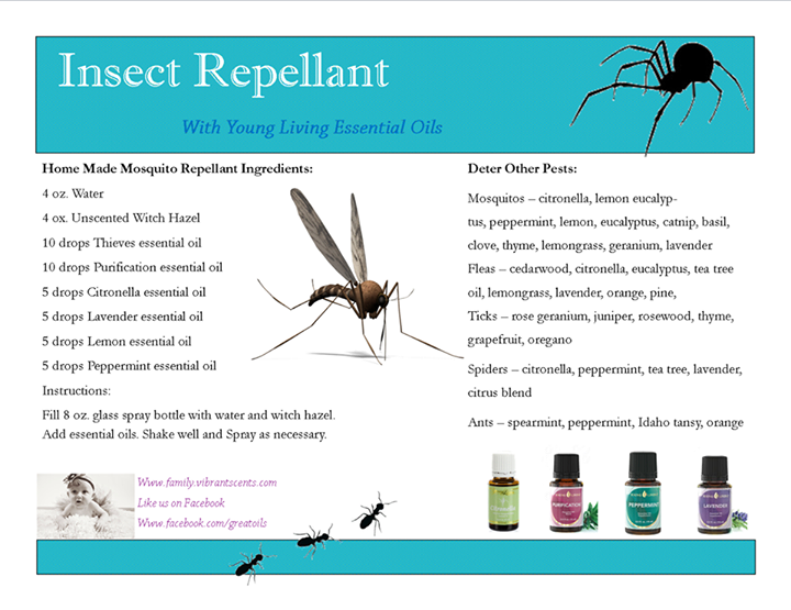 oregano insect repellent If you're looking for a natural way to keep insect pests out of your home and garden, basil is the answer how to use basil as an insect repellent | hunker join our newsletter.