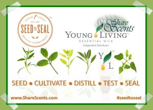 Seed to Seal Plant Graphic YL SS